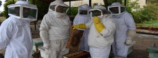 A Step Towards Success for a Brighter Life- Beekeeping